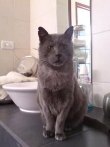 Misho, gato